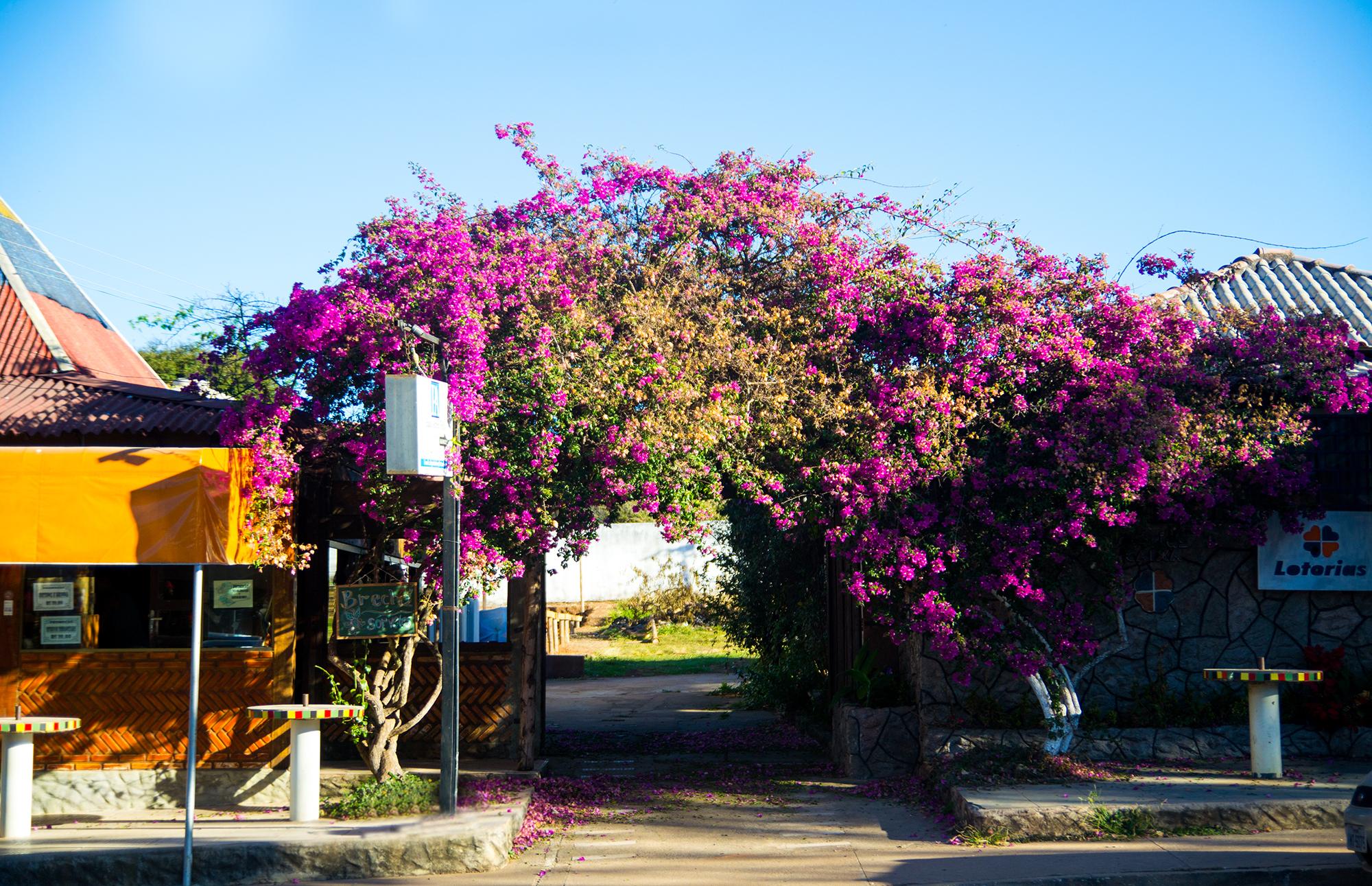Eu amei essa foto por vários motivos: 1) as cores se harmonizando; 2) flores 3) céu! Aqui é um pedacinho da cidade de Alto Paraíso, que um post depois também, porque merece s2